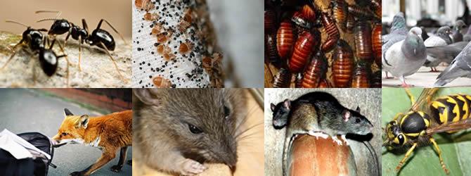 Wolverhampton Pest Control Service: professional pest control for Wolverhampton, Birmingham & The West Midlands, please contact us for more info.